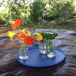 Flowers as #sensoryexperience we #looked