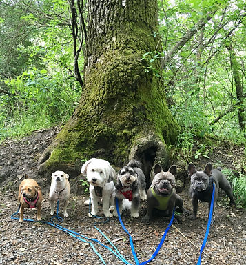 Green tree dog pic.jpg