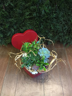 2021_valentines_day_succulent_planter