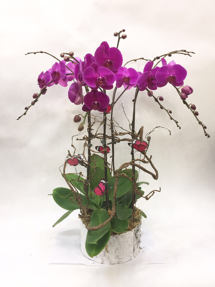 2017 XM orchid.JPG