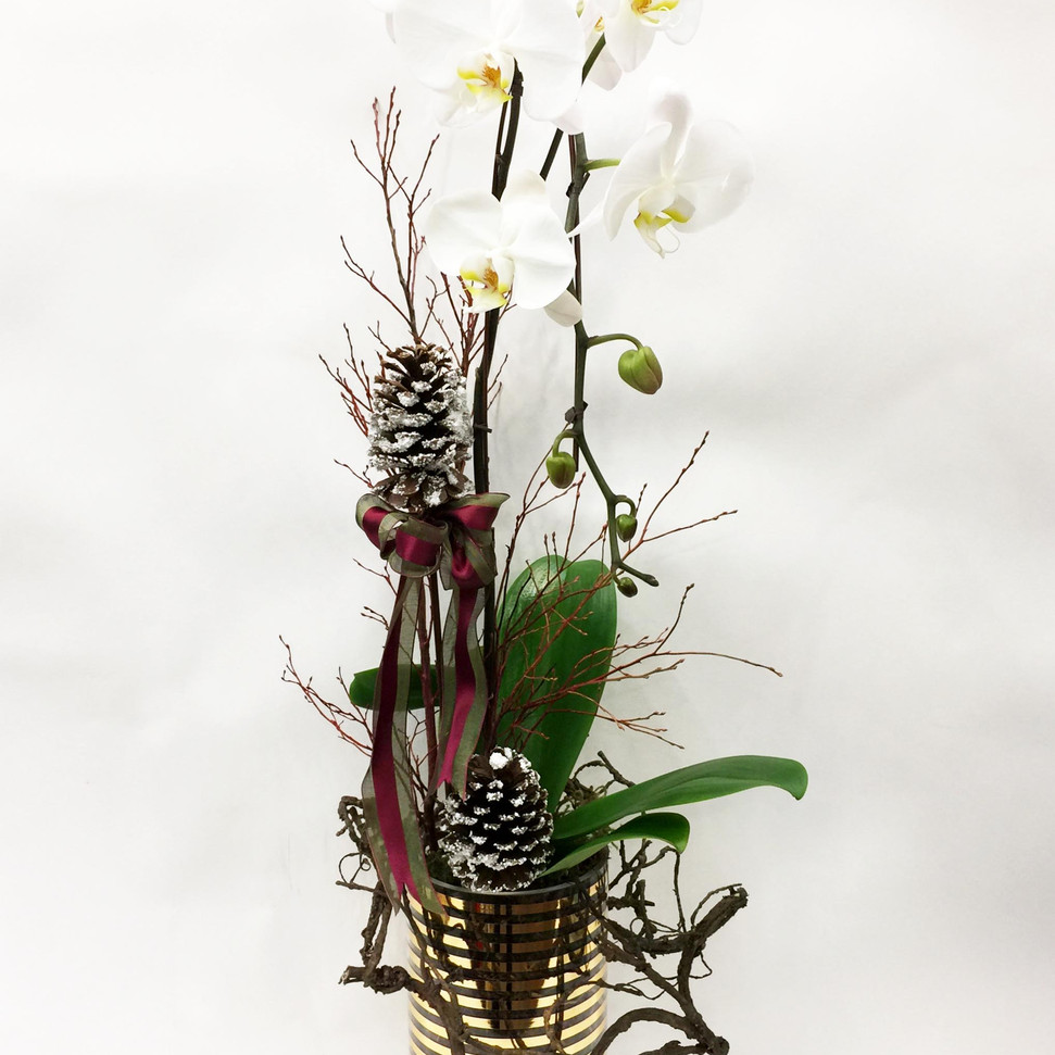 2020_christmas_orchid_planter