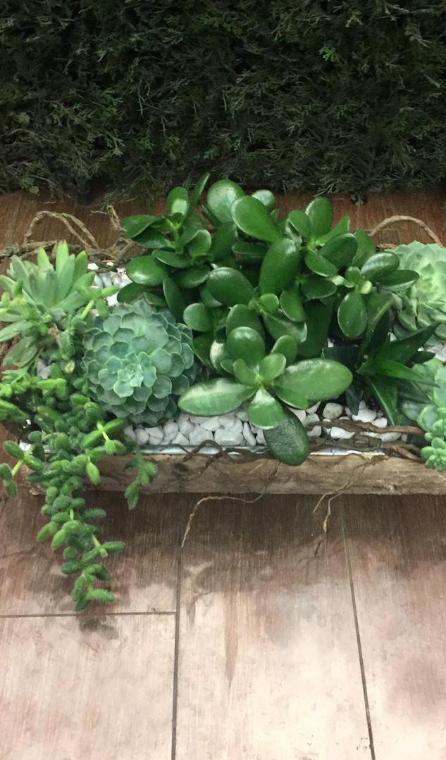 vancouver succulent planter