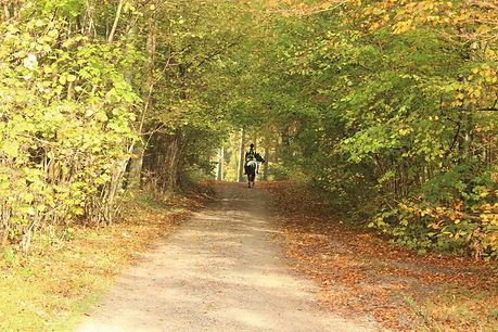 Rideklub skov.jpg