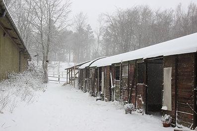 Rideklub sne.jpg