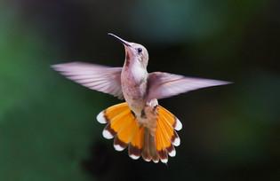 Hummingbirds - spiritual teachers