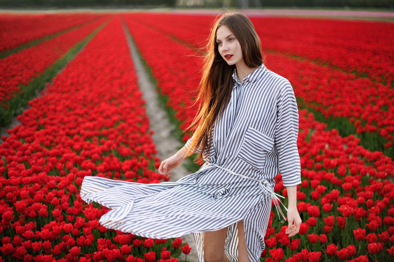 Flower fields in Amsterdam