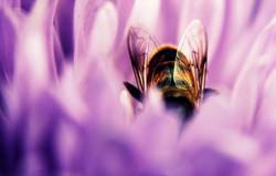 Natura | Klaudia O.