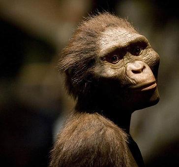 evolution%20of%20human%20brains_edited.jpg