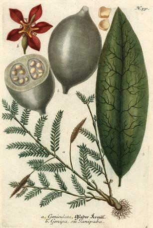 Tatouage au Jagua