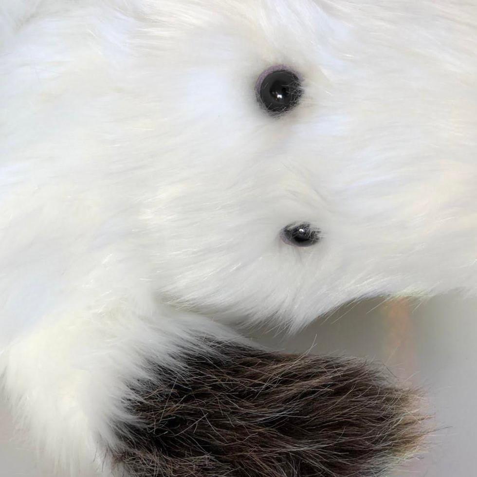 White eys