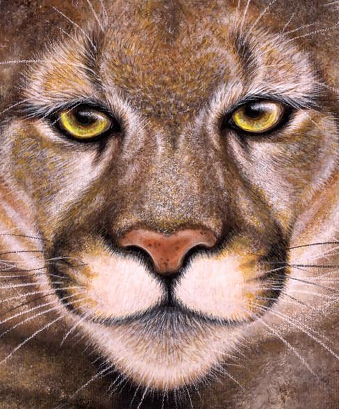 Puma by Artist illustrator Siew Gratton