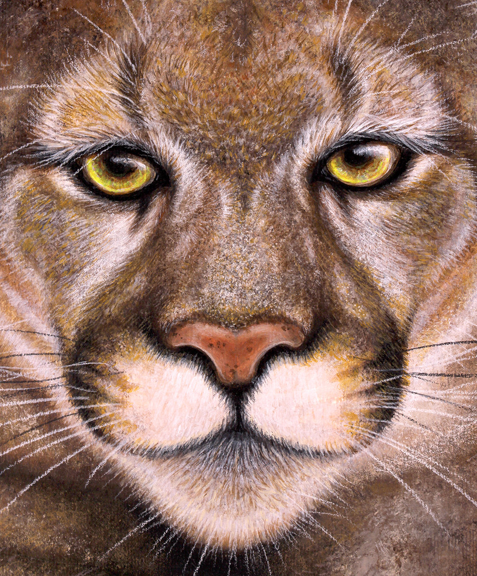 Puma by Artist illustrator Siew Gratton