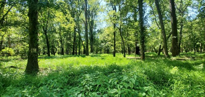 Riverpark Forest.jpg