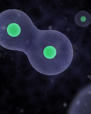 Microcurrent Celluar Biology.png