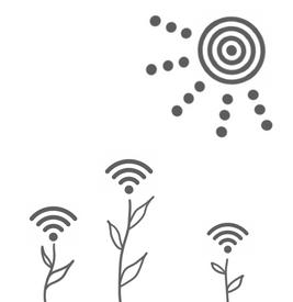 wifi blooms.png