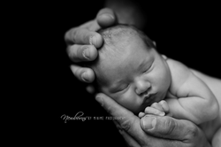 Newborn Photographer in Nelson NZ
