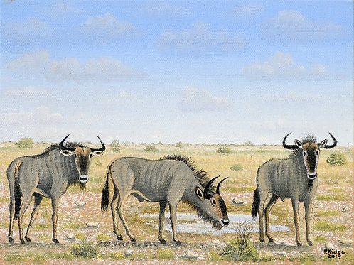 Red Hartebees in Etosha