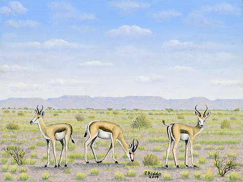 Springbok in Kalk Plateau between Tses and Mariental
