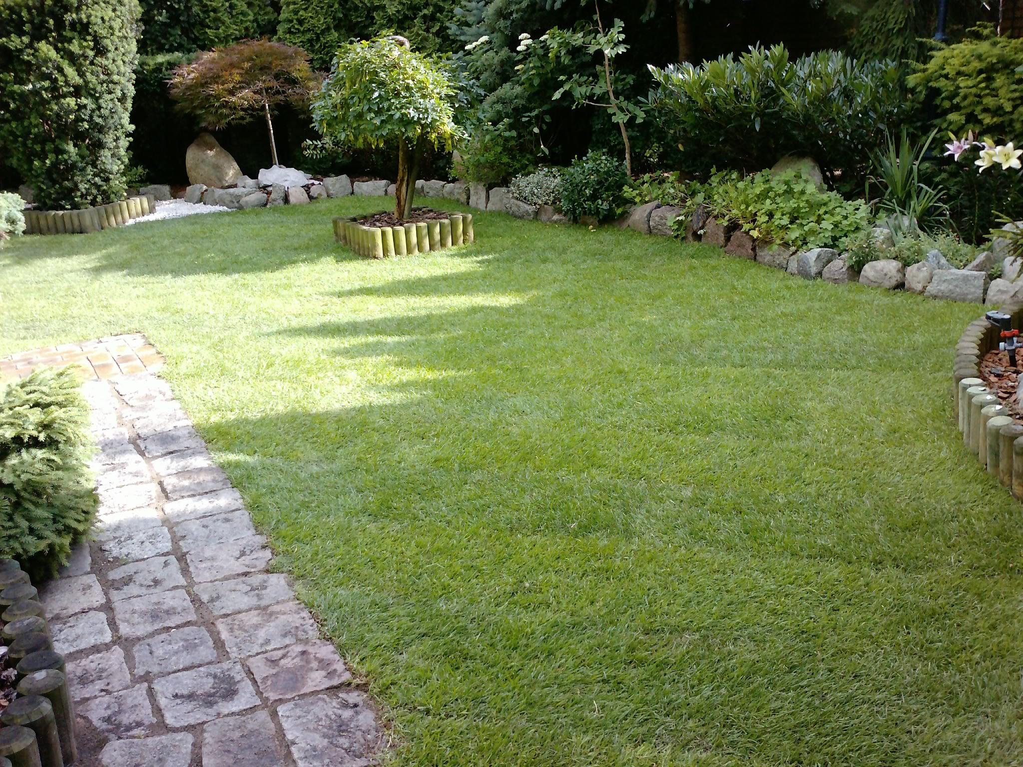trawnik z rolki i nawadnianie