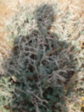 Couzijn van Leeuwen shadow picture photograph foto zelfportret selfportrait couzijn van leeuwen