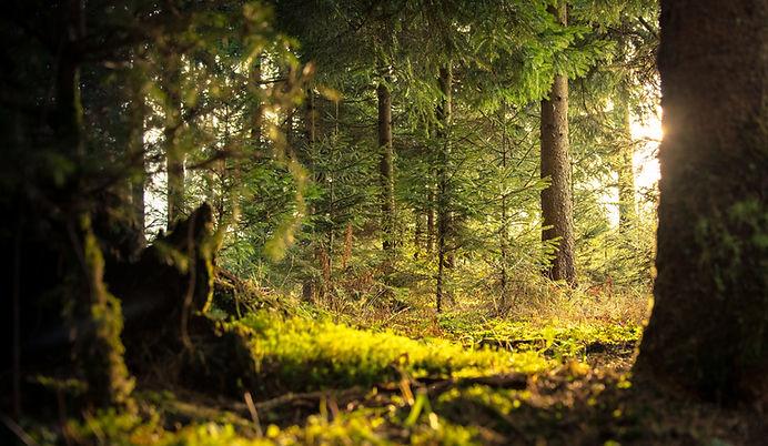 Forêt sous-bois