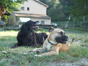 chiens pension Village canin des Cévennes