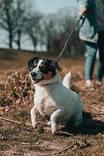 chien en laisse promenade