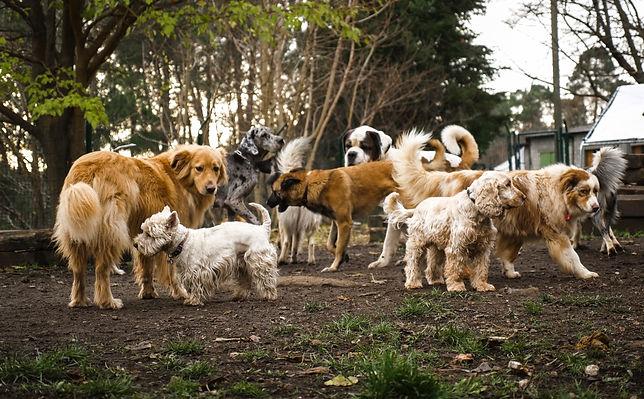 groupe de chiens au Village canin des Cévennes