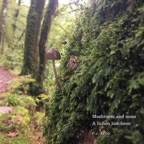 A little micro-poetry written on a walk
