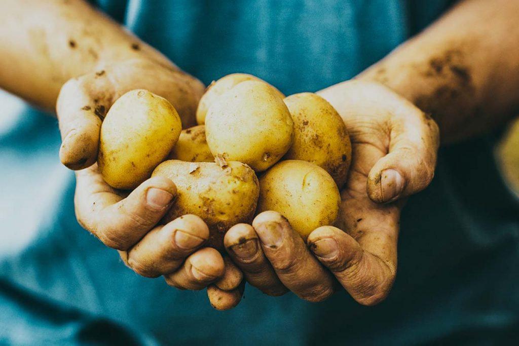 hands-holding-potatoes-1024x683.jpg