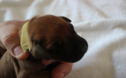 Miss. Yellow 2.5 days old