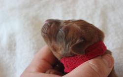 Mr. Red 2.5 days old