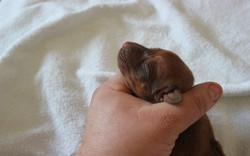 Mr. Blue 2.5 days old
