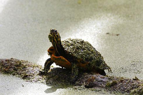 turtle%20pic_edited.jpg