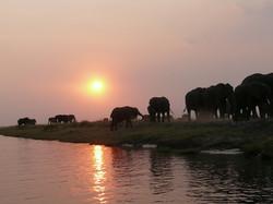 elephant-334454_1920