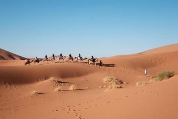 Egyptian_Desert