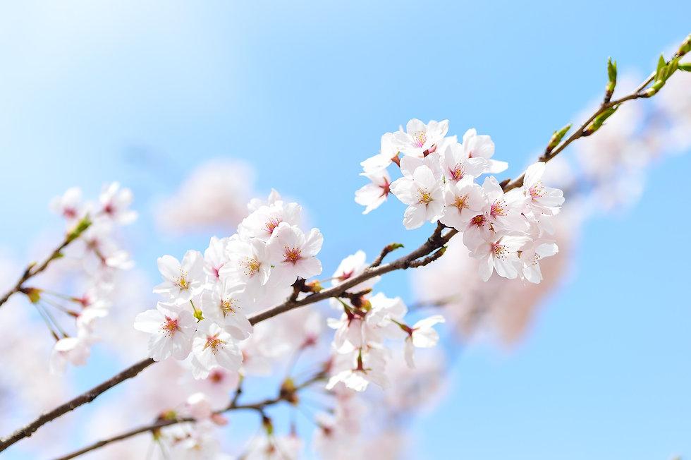 spring-2218771_1920.jpg