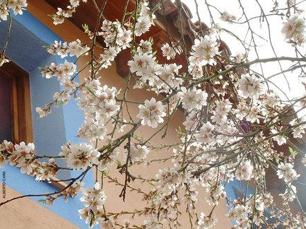 Flores-Artesonado.jpg