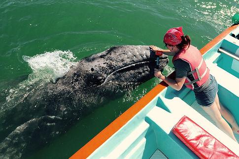 MJM with gray whale calf - Morgan J. Mar