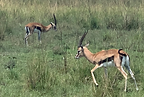 Narok, Kenya - INaturalist - xtinatoms.png