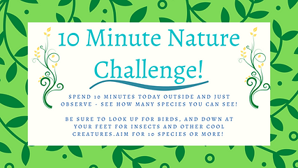 10 Minute Nature Challenge! (1).png