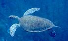 Curacao, - INaturalist - jeanpaulboerekamps.png