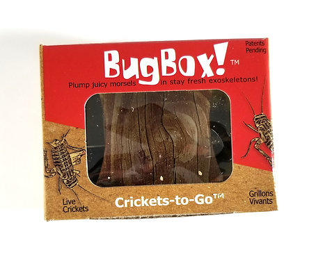 BugBox! Crickets 25-30 Count