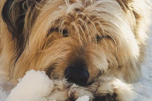 Kit de Toilettage du chien à Poils Longs