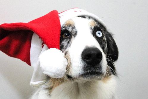 Super Boxe de Noël pour chien