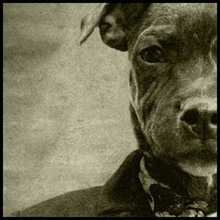 'Mad Dog'
