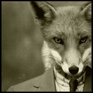'A Sly Fox Comes This Way'