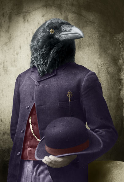 Suited Raven