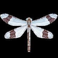 Bianco Dragonfly