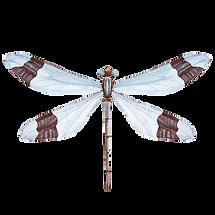 White Dragonfly